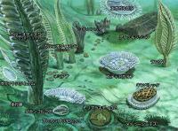 エディアカラ 生物 群