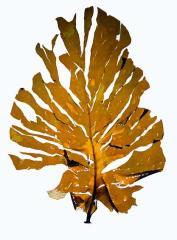 藻類の分類 @ 藻類の進化